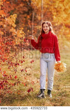 Beautiful Young Woman In A Red Sweater In The Autumn Forest Portrait, A Bouquet Of Fallen Maple Leav