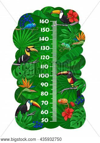 Kids Height Chart Toucan Birds And Chameleons In Jungle, Tropical Leaves Growth Measure. Vector Wall