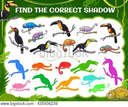 Find Correct Shadow Of Toucan And Chameleon, Vector Kids Game Or Tabletop Riddle. Find And Match Sam