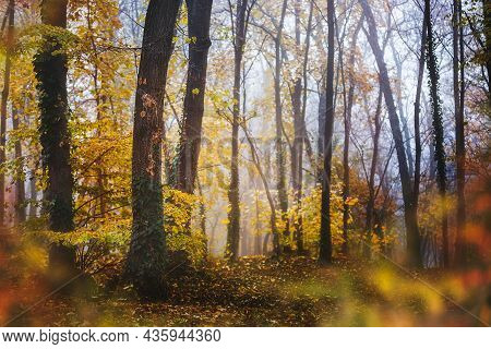 Foggy Autumn Forest. Color Gradient Of Autumn Forest. Autumn Woods In The Morning. Selective Focus