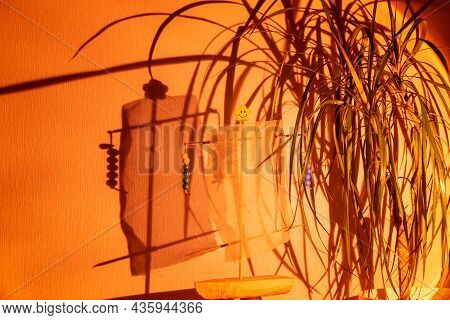 Directed Spotlight Beam Illuminates Green Plant In White Pot Standing On Table And Reflects Dark Sha