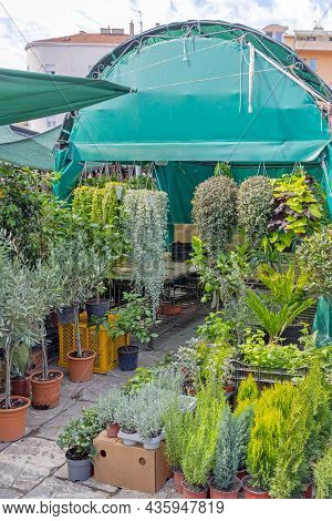 Green Plants And Small Trees At Garden Centre Booth