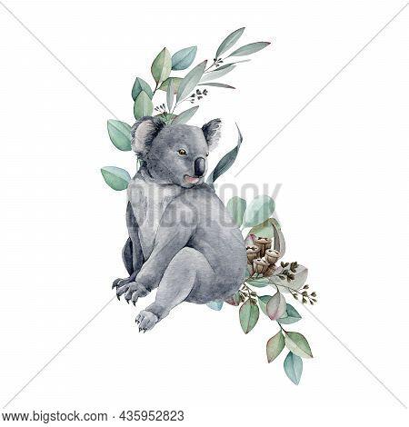 Koala Bear Watercolor Illustration. Grey Wild Australia Endemic Furry Animal With Eucalyptus Leaves.