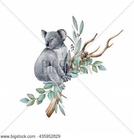 Koala Animal Watercolor Illustration. Grey Wild Australia Endemic Furry Bear With Eucalyptus Leaves.