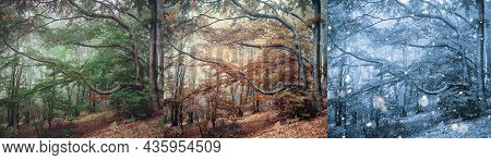 Panorama Of Foggy Mystic Forest. Trees In Spring, Autumn And Winter Season Woodland In A Fog. Panora