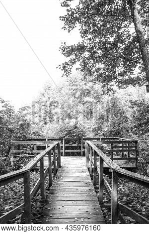 Wooden Footpath Leads Through Bushes And Swampland In The Forest, Black And White Image