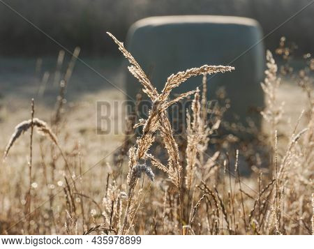 Autumn, Frosty Morning In The Meadow. Blades And Ears Of Grass, Plant Leaves Are Covered With Frost
