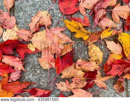 Colorful Red And Yallow Autumn, Fall Leaves Lying On A Pavement