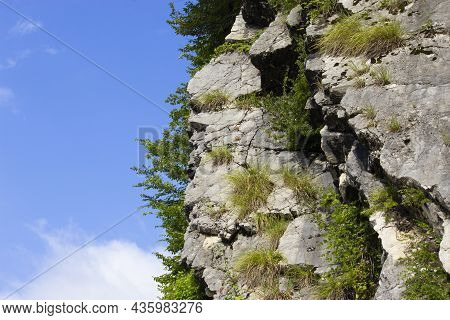 Trees And Grass Grow On The Rock. In Background Blue Sky With Clouds. Nature Wallpaper. Rock On A Ba
