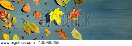 Colorful Autumn Leaves Overhead View - Flat Lay