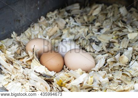 Multi-colored Mixed Chicken Eggs In Backyard Coup