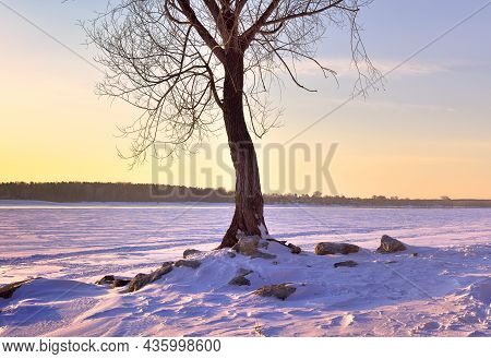 A Tree On The Bank Of The Winter River. The Trunk Of A Bare Tree On A Rocky Hillock, The Bank Of The