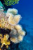 coral reef with beautiful white soft coral at the bottom of red sea in egypt poster