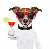 funny cocktail dog holding a martini glass poster