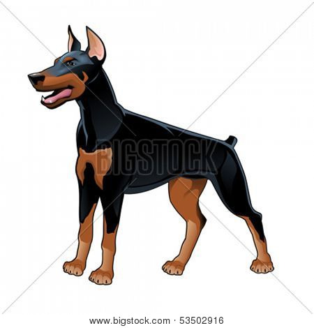 Dobermann Pinscher. Vector isolated dog.