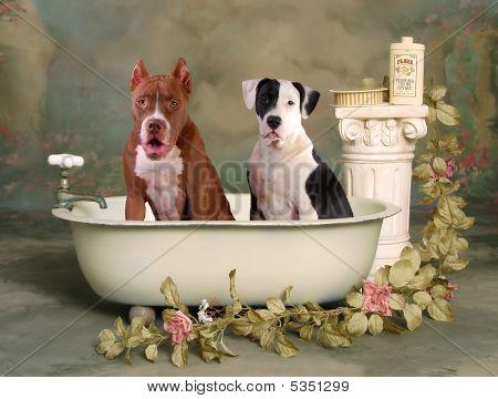 Bath Time Buddies