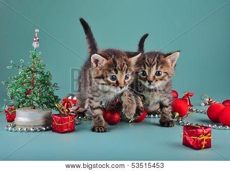Small  Kittens Among Christmas Stuff
