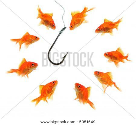 group of goldfish around empty hook isolated on white poster