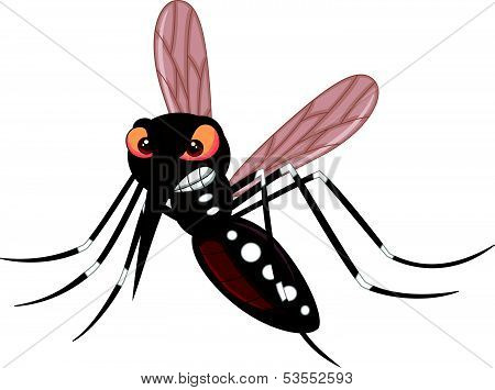 Vector illustration of Angry mosquito cartoon isolated on white background poster