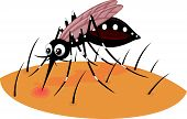 Vector illustration of Mosquito cartoon sucking blood from human skin poster