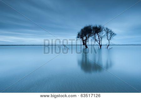 Lone Tree Folly Beach County Park Charleston South Carolina