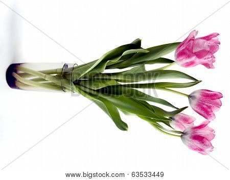posy of pink tulips
