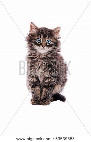 Adorable Fluffy Tabby Cat