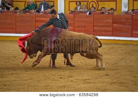 Powerfull Bull