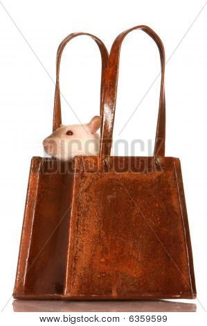 Cute white pet rat peering out of a rusted tin basket poster