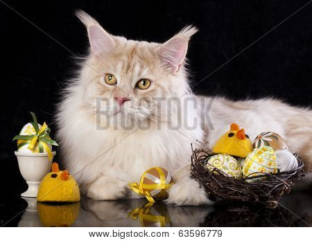 Maine Coon cat  and easter egs poster