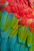 Colorful plumage of ara parrot close up poster