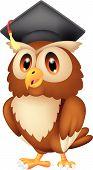 Vector illustration of Owl cartoon wearing graduation cap poster