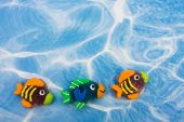 A large group of colourful fish sitting on blue water background colourful fish border poster