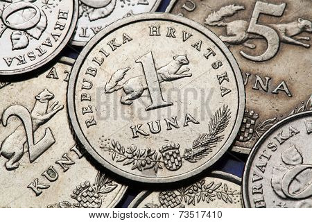 Coins of Croatia. Croatian national coat of arms and marten (Martes martes) depicted in the Croatian one kuna coin.