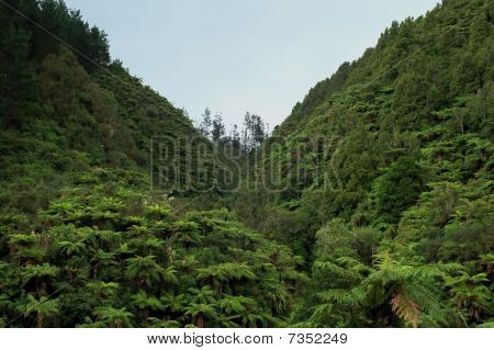 New Zealand Fern Forest