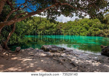 Casa Cenote Limestone Mangrove, Mexico, Tulum