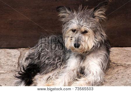 Adorable shaggy dog