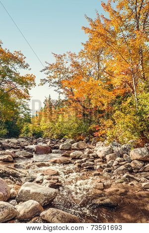 Foreat stream in the fall (Above Mary Ann Falls Highlands National Park Cape Breton Nova Scotia Canada) poster