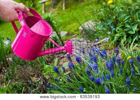 Spring Works Garden Watering Plants Watering Can