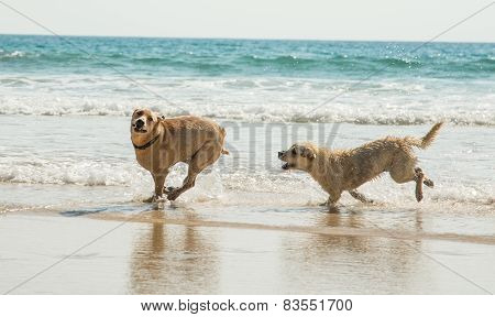 Two Playing Dogs
