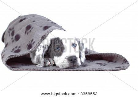 Home puppy