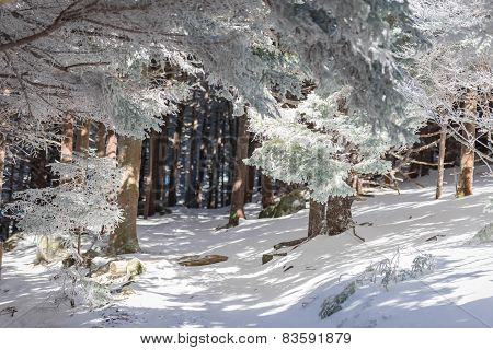 Winter Appalachian Trail Hike