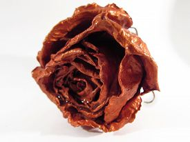 Dried Colored Rose Bud On A White Background