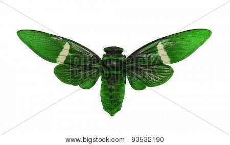macro of green leafhopper isolated on white background