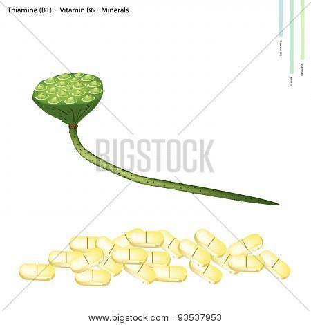 Lotus Seed Pods With Vitamin B1 And Vitamin B6