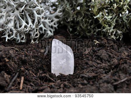 Rock Crystal On Forest Floor