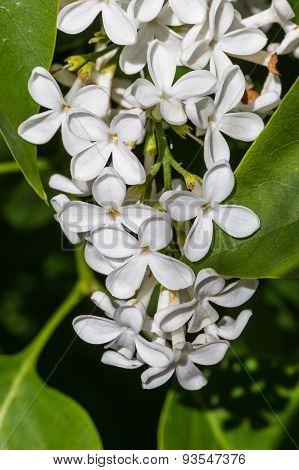 White Flowers Near Green Leaves