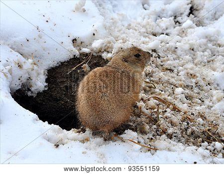 Animals - whiz in winter