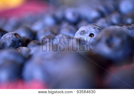 One Lone Blueberry Poking Its Head Up In A Sea Of Blueberry Sameness