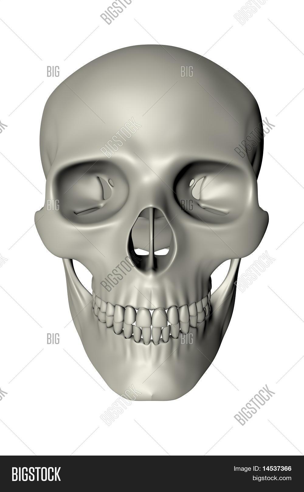 Human Skull Front Image Photo Free Trial Bigstock
